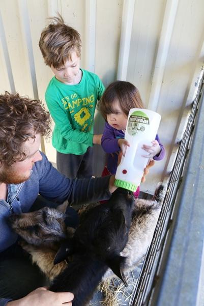 Zahladee feeding Calf